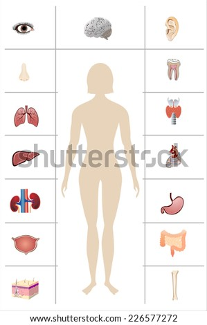 illustration of diagram of human anatomy - stock vector