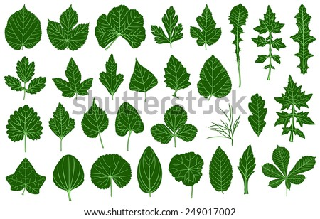 Illustration of different leaves isolated on white - stock vector