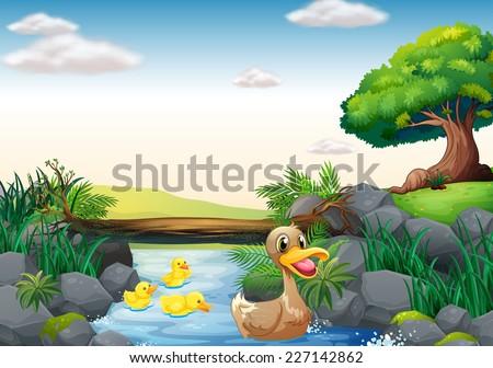 illustration of ducks swimming in the river - stock vector
