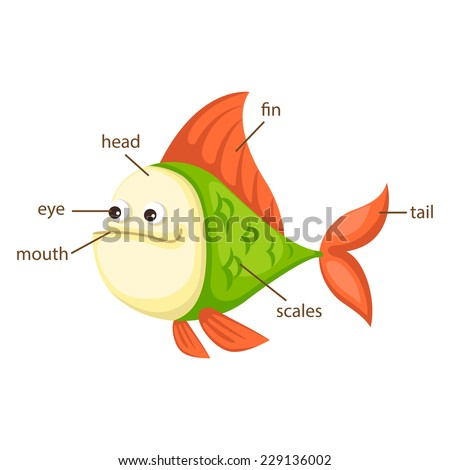 illustration of fish vocabulary part of body vector - stock vector