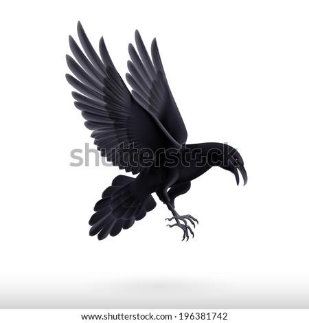 Illustration of flying black raven isolated on white background - stock vector