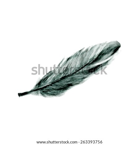 Illustration of hand drawn feather isolated on white background - stock vector