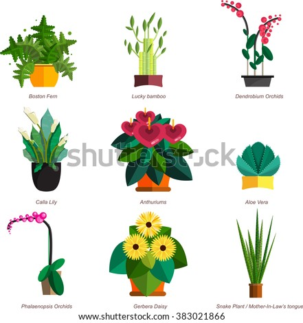 Illustration of houseplants, indoor and office plants in pot. Dracaena, fern, bamboo, spathyfyllium, orchids, Calla lily, aloe, gerbera, snake plant, anthuriums. Flat plants, vector plants icon set - stock vector