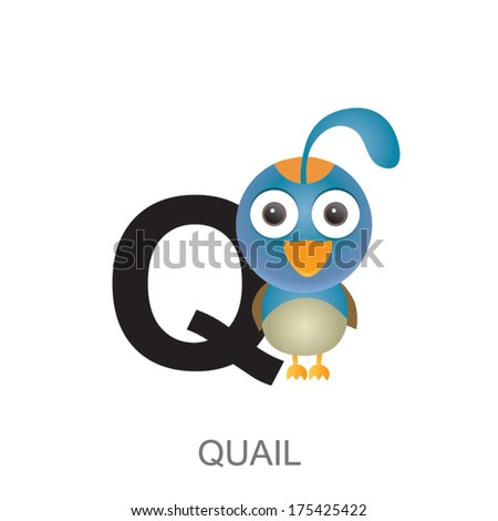 illustration of isolated animal alphabet. Q is for quail. Vector illustration. - stock vector
