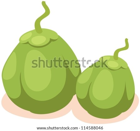 illustration of isolated green coconut on white - stock vector