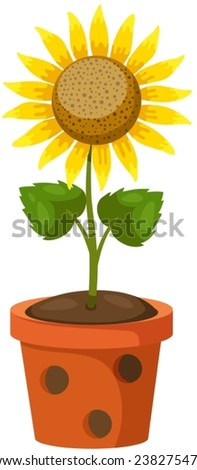 illustration of isolated sun flower in a pot on white