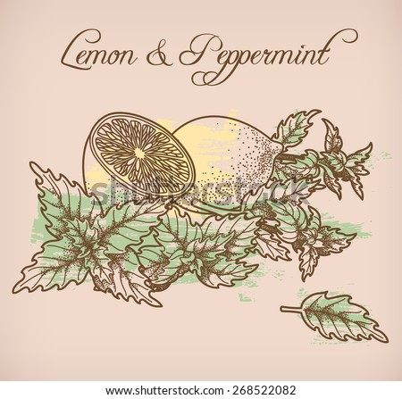 Illustration of lemon and peppermint - stock vector