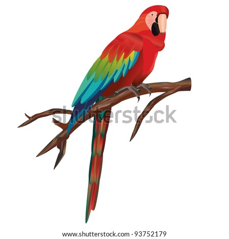 Illustration of macaw parrot sitting on branch, isolated on white background,  vector - stock vector