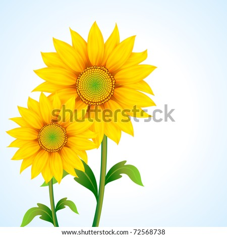 illustration of pair of sunflower on abstract background