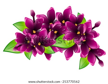 Illustration of Spring Wet Lilac Flower Branch - stock vector