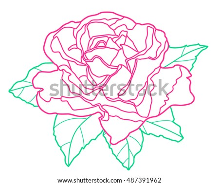 Illustration of the contour rose flower icon