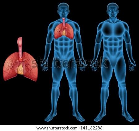 Illustration of the human respiratory system - stock vector