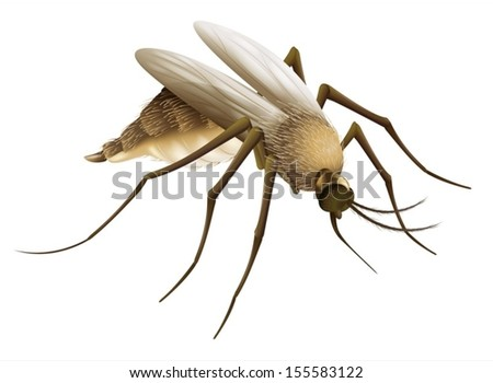 Illustration of the mosquito - stock vector