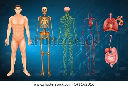 Illustration of various human body systems and organs - stock vector