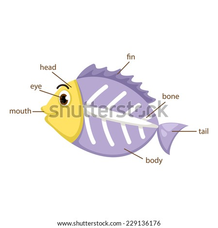 illustration of x-ray fish vocabulary part of body vector - stock vector