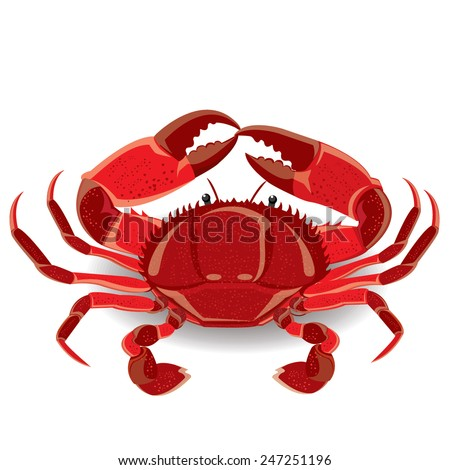 illustration red sea crab with claws. Vector - stock vector