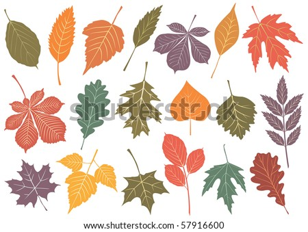 Illustration set of 19 leaves with autumn colors. All objects are isolated and grouped. Colors and transparent background are easy to adjust. - stock vector