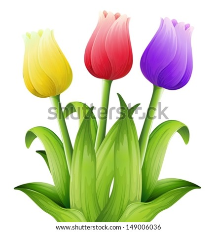 Illustration showing the tulips - stock vector