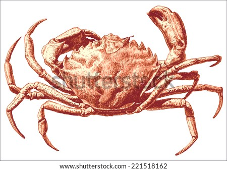 illustration with a large red crab drawn by hand on a light background (Brachyura Linnaeus) - stock vector