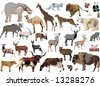 illustration with animals collection isolated on white background - stock vector