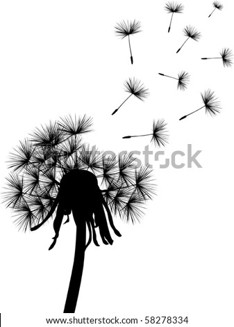 illustration with black dandelion on white background - stock vector