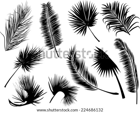illustration with black fern and palm leaves isolated on white background - stock vector