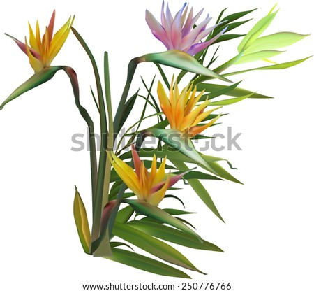 illustration with blossoming green bamboo isolated on white background - stock vector