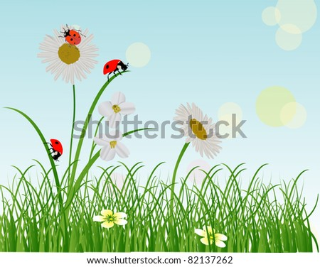 illustration with chamomiles and ladybugs in green grass - stock vector