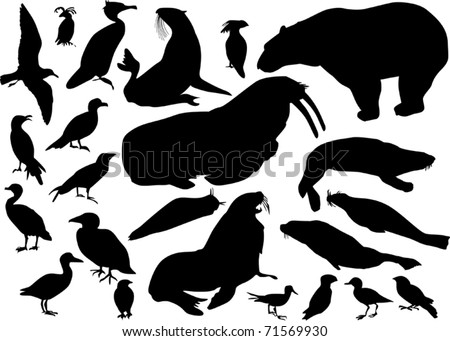 illustration with coastal birds and animals isolated on white - stock vector