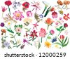 illustration with collection of flowers isolated on white background - stock vector