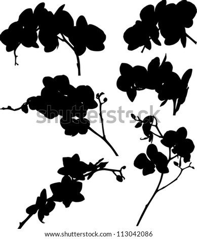 illustration with collection of orchid silhouettes isolated on white background - stock vector