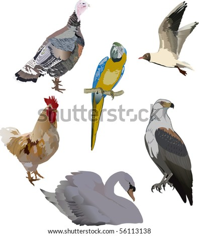 illustration with color birds collection isolated on white - stock vector