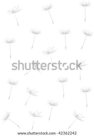 illustration with dandelion on white background