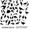 illustration with different bird silhouettes - stock vector