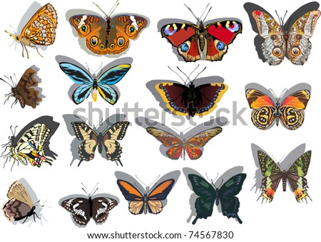 illustration with different butterflies isolated on white background - stock vector