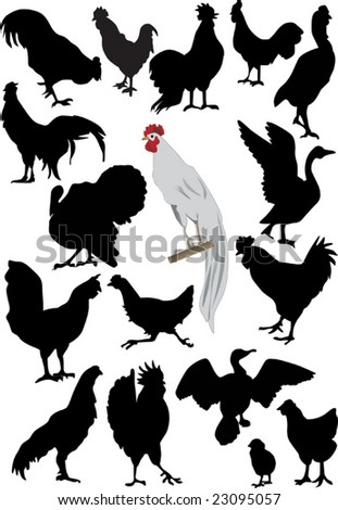illustration with different farm bird silhouettes - stock vector