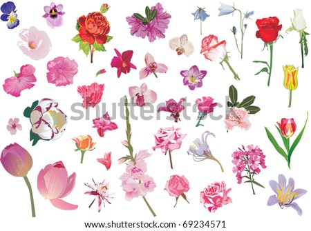 illustration with different flowers collection isolated on white background - stock vector