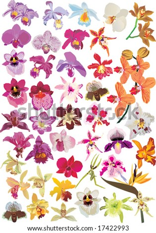 illustration with different orchid collection - stock vector