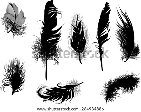 illustration with eight feathers isolated on white background