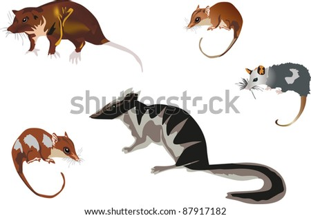 illustration with five rodents isolated on white background - stock vector