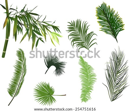 illustration with green branches isolated on white background - stock vector