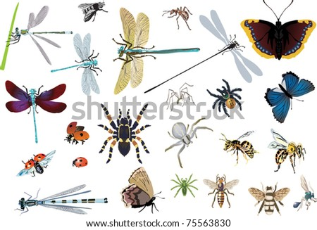 illustration with insects isolated on white background - stock vector