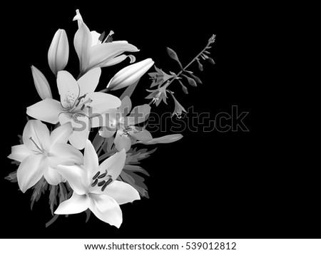 Illustration with lily flowers isolated on black background
