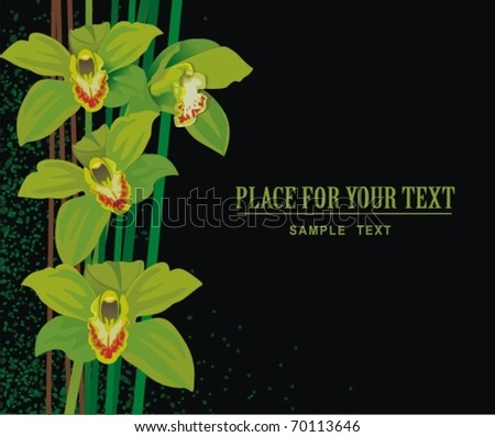 illustration with orchids - stock vector