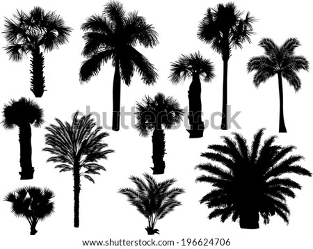illustration with palm silhouettes isolated on white background - stock vector