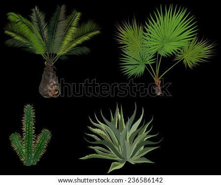 illustration with palm trees and cactus isolated on black background - stock vector