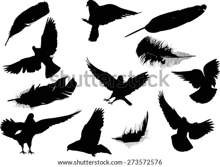 illustration with pigeon and feather silhouettes isolated on white background - stock vector