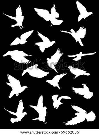 illustration with pigeon silhouettes isolated on black background - stock vector