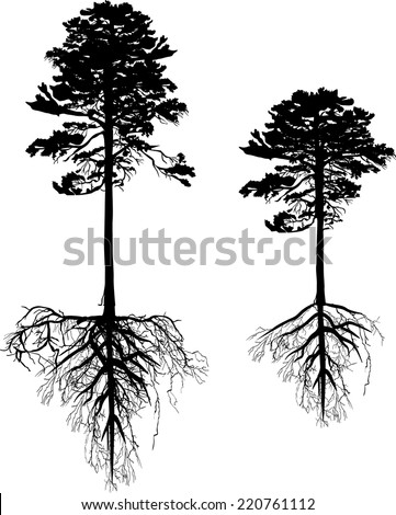 illustration with pine tree silhouettes isolated on white background - stock vector