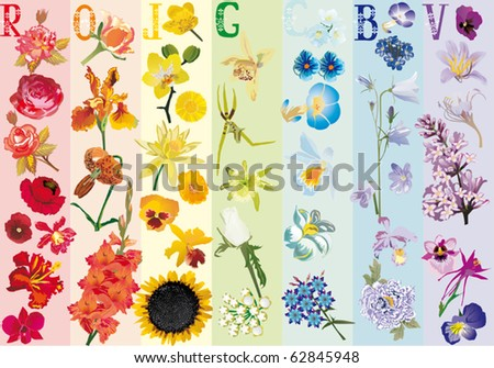 illustration with rainbow flowers collection - stock vector